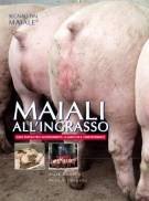 Maiali all'ingrasso