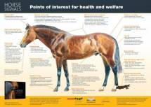 Horse Signals poster - Health and welfare - US edition