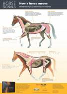 Horse Signals poster - How a horse moves