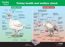 Poster Turkey Signals - Turkey health and welfare check